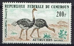 Cameroon, Bird, Ostrich (Struthio Camelus), Waza National Park, 1962, VFU  Airmail - Cameroon (1960-...)