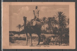 Tripolitania - Nell'oasi - Libia