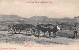 88 - Bruyères-en-Vosges - Beau Plan D'un Attelage De Boeufs Vosgien - Bruyeres