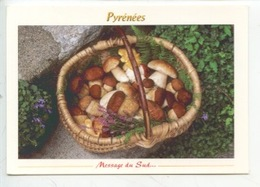 Champignon : Cpe Bolet - Pyrénées Message Du Sud Une Belle Cueillette - Pilze