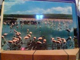 KENIA  FENICOTTERI - Pink Flamingos - Lake Nakuru Kenya  N1965  HA7681 - Kenia