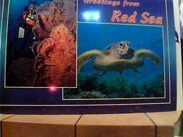 EGITTO  RED SEA MAR ROSSO TURTLE TARTARUGA   VB1997 HA7684 - Altri