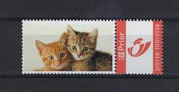 DOUSTAMP Kittens MNH ** POSTFRIS ZONDER SCHARNIER SUPERBE - Private Stamps