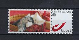 DOUSTAMP Kittens MNH ** POSTFRIS ZONDER SCHARNIER SUPERBE - Sellos Privados