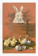 Joyeuses Pâques . Lapin Poussins . Happy Easter . Rabbit Chicks . Frohe Ostern. Kaninchen Küken - Pâques