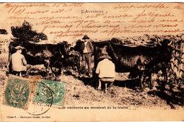 Eygurande-Merlines Adressée à Rochefort Montagne. La Vacherie Au Moment De La Traite. - Eygurande