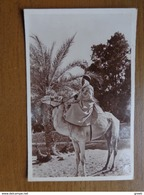 27 Oude Kaartjes Met KAMELEN - CAMELS (zie Foto's) - Cartes Postales