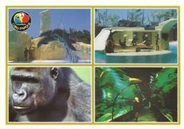 Tenerife Loro Parque / Gorille Gorilla Dauphin Delphin Otarie Sea Lion Raie Ray - Animaux & Faune