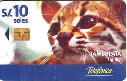 PERU - Puma, Tambopata/Tigrillo, Telefonica Telecard, Chip GEM3.1, Tirage %50000, 04/00, Used - Peru