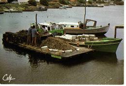 33 Vers Arcachon Triage Des Huîtres Au Port N°3880 En 1985 Exclusivité éditions CELY Michel Pandaries - Arcachon
