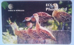 West Indian Tree Duck EC$10 - Antigua En Barbuda