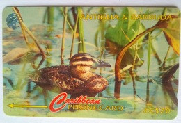 104CATD Masked Duck EC$20   Slash C/n - Antigua En Barbuda