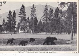 TRIPLET TAG A LONGS CAADIAN ROCKIES  AUTENTICA 100% - Alberta