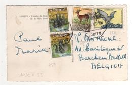 """Timbre , Stamp  Yvert N° 337 , 362 , 359 """" éléphant , Rapace , Antilope """"  Sur Cp , Carte , Postcard Du 10/09/1955 - Angola"""