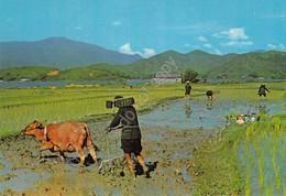 Cartolina Hong Kong Chinese Farmer During Spring Autumn Seasons Cow Ploughing - Cartoline