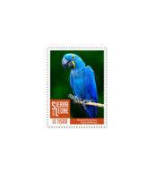 SIERRA LEONE 2018 MNH Blue Parrot 1v - OFFICIAL ISSUE - DH1902 - Sierra Leone (1961-...)