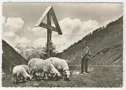 Valais       Simplon-Kulm         Berger Et Ses Moutons - VS Valais