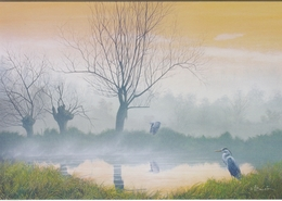 6. BUZIN. HERON CENDRE - Pájaros