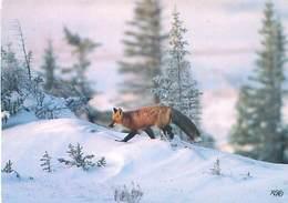 Renard    Y 619 - Animals