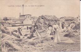 Courtrai- Culture Du Lin. La Mise En Carpettes - Kortrijk