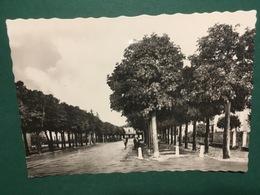 Cartolina Faenza - Viale Della Stazione - 1960ca. - Ravenna