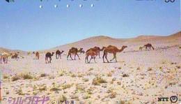 Télécarte Japon CAMEL * CHAMEAU * Kameel * Kamel * Camello (390) PHONECARD JAPAN * TELEFONKARTE - Jungle