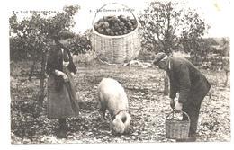 CPA Le Lot Pittoresque  Les Gaveurs De Truffes Paysans Cochon Panier Truffes Scène Champêtre N°2 - Agriculture