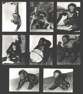 8 Snapshots Zoo Antwerpen - Aap / Monkey / Singe - Apen