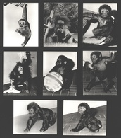 8 Snapshots Zoo Antwerpen - Aap / Monkey / Singe - Singes