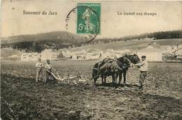 39* JURA  - Chevaux  Labour                     MA85-1284 - France
