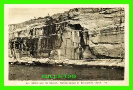 PERCÉ, QUÉBEC - GANNET LEDGES ON BONAVENTURE ISLAND - H. V. HENDERSON - - Percé