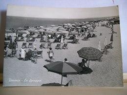 1959 - Pisa - Tirrenia  - La Spiaggia - Animata - Ed. Artini Duilio - Pisa