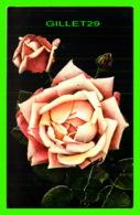 FLEURS - DES ROSES - MAX ETTLINGER & CO LTD - TRAVEL IN 1910 - - Fleurs