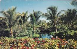 Bahamas Freeport-Lucaya Garden Of The Groves - Bahamas