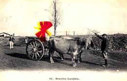 Bouvier Landais - Elevage