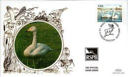 IRELAND,   BENHAM  FDC,  Bird     /      IRLANDE,   Lettre De Première Jour,  Oiseau   1999 - Cygnes