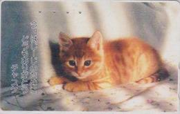 RARE Télécarte Japon / TCP 110-001 - ANIMAL - CHAT - CAT Japan Phonecard - KATZE - GATTO - GATO - KAT -  4934 - Katten
