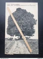 GENAPPE - BAISY-THY»Environs De GENAPPE BAISY Arbre Ste-Anne,+- 400ans»Panorama,animée,bétails (Édit A.LEBON ,Genappe) - Genappe