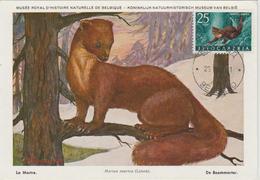 Yougoslavie Carte Maximum Animaux 1960 Marthe 820 - Cartes-maximum