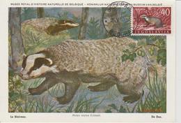 Yougoslavie Carte Maximum Animaux 1960 Blaireau 823 - Cartes-maximum