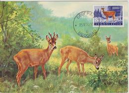 Yougoslavie Carte Maximum Animaux 1960 Chevreuil 825 - Cartes-maximum