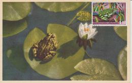 Yougoslavie Carte Maximum Animaux 1976 Grenouille 1532 - Cartes-maximum