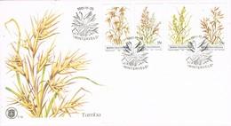 31463. Carta F.D.C. WINTERVELD (Bophutatswana) 1981. Plantas. Vegetal - Bofutatsuana