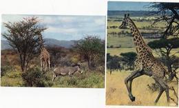 Set 2  Cards Giraffe Zebra - Girafes
