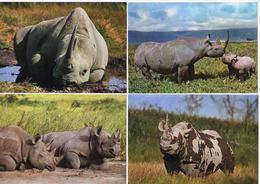Set 4 Cards Rhinoceros - Rhinocéros