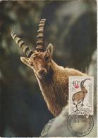 Tchécoslovaquie Carte Maximum 1963 Bouquetin 1307 - Cartas