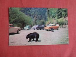 Black Bears By Classic Auto's  Great Smokey Mountain > Ref 3152 - Bears