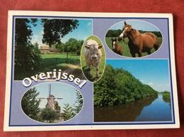 Nederland. Pays-Bas. Holland. Overijssel ( Paarden Koe Molen ) - Paarden