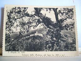 1951 - Firenze - Pontassieve - S. Brigida - Santuario Della Madonna Del Sasso - Cartolina Originale - Firenze
