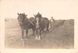 PHOTO D UN HOMME LABOURANT SON CHAMP AVEC DES CHEVAUX 9 X 6 CM 1948 - Beroepen